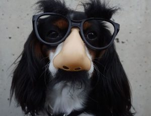 A dog wearing Groucho Marx glasses